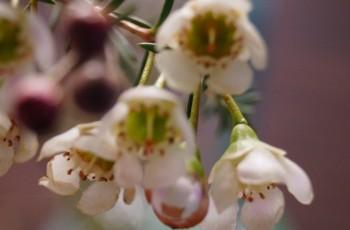 Endlich wieder zarte Blumen – Frühling, bitte!