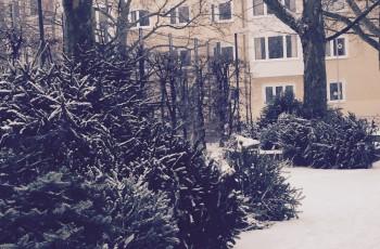 St. Knuts-Tag – Werft die Bäume aus dem Fenster! Oder: Ordnung ist das halbe Leben.