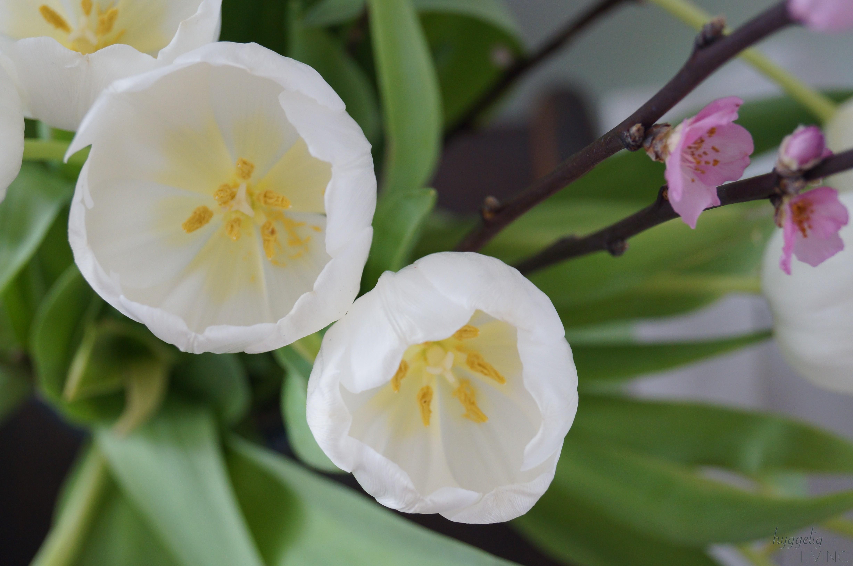 Mit frischen Blumen, Blüten und Tulpen in zarten Farben