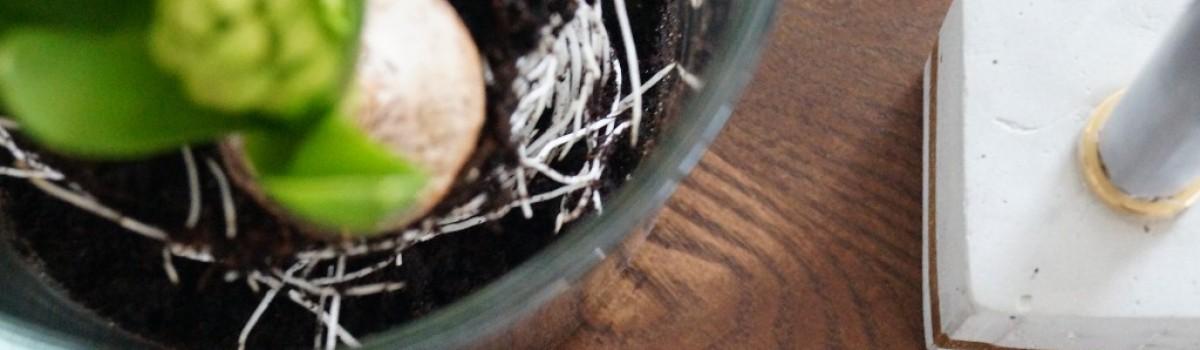 Frühling auf dem Tisch mit Hyazinthen